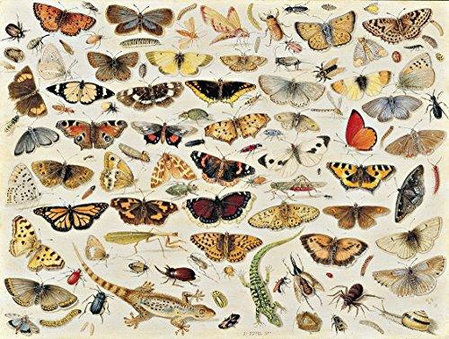 Artifact Puzzles - Jan Van Kessel Butterflies Wooden Jigsaw Puzzle