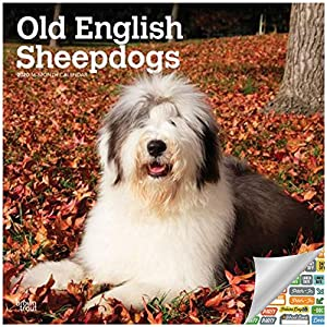 Old English Sheepdogs Calendar 2020 Set - Deluxe 2020 Sheepdogs Wall Calendar with Over 100 Calendar Stickers (Dog Lovers Gifts, Office Supplies) 4