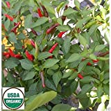 Pepper, Rooster Spur (Capsicum Annuum) Organic- 10 Seeds - Mississippi Heirloom !