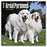 Great Pyrenees 2018 12 x 12 Inch Monthly Square Wall Calendar, Animals Dog Breeds (Multilingual Edition)