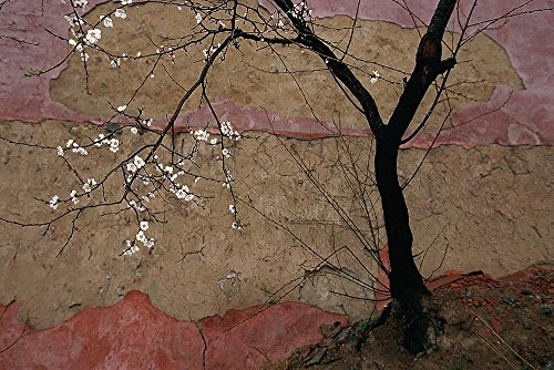 Plum Tree at Temple Wallpaper Wall Mural - Self-Adhesive - Multiple Sizes - National Geographic Image from Magic Murals