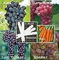 Bulk 4 Grape Vine Seeds Survival Seeds 190 Seeds Upc 646263360811 + 5 Plant Markers