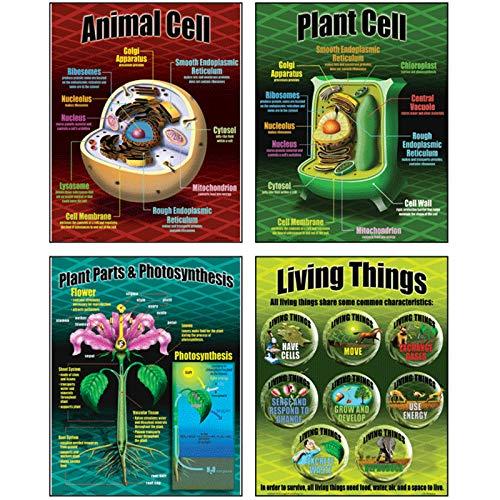 Large Poster Set - McDonald Publishing Life Science Poster Set (MC-P077)