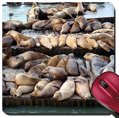 Liili Suqare Mousepad 8x8 Inch Mouse Pads/Mat IMAGE ID: 17096492 Large group of Sea Lions rest on rows of Piers near Pier 39 in San Francisco - San In California Francisco Pier 39