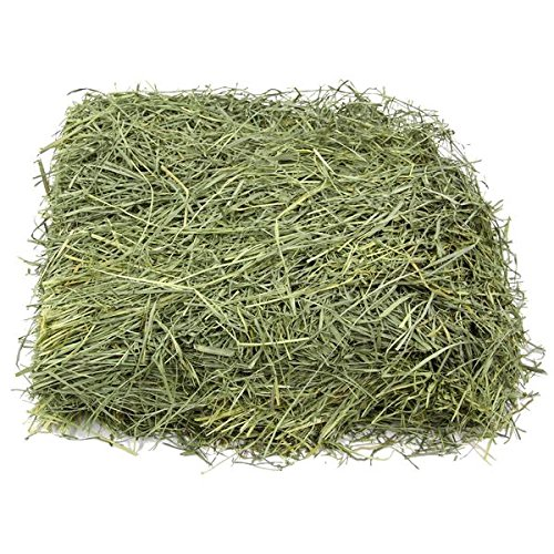 KMS Hayloft Premium Bluegrass Hay for Small Animals ... (25 lb) (Organic Orchard Grass)