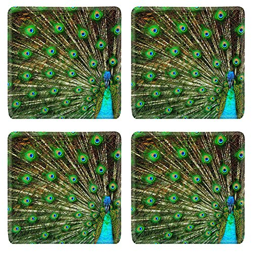 Liili Square Coasters Peacock Photo 1916 - Dancing Squares Natural Shopping Results