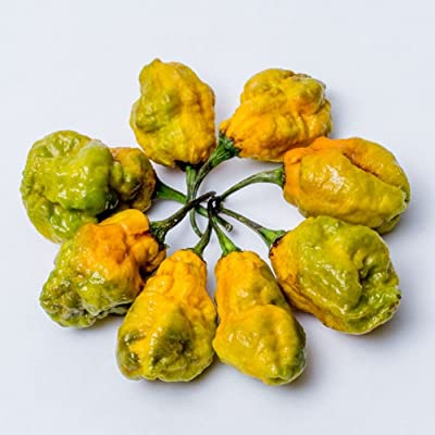 Mustard Moruga Brain Seeds by Pepper Joe's | Pepper x Chile | Super Hot Seeds : Garden & Outdoor