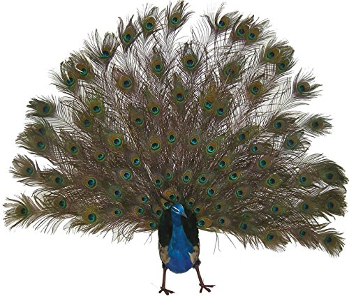 1 Pc, 60 Inch Wide Open Tail Artificial Peacock Boasts 15'' Long Body by Generic