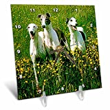 Dogs Greyhound - Greyhound - 6x6 Desk Clock (dc_483_1)