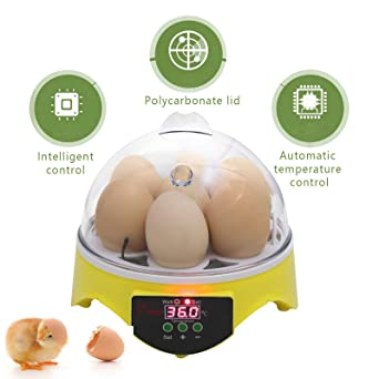 5 X 12 Hole Large Polystyrene Egg Boxes Hatching/incubation Chicken Pet Supplies