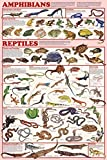 Amphibians & Reptiles Poster 24x36