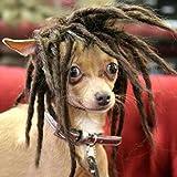 Tangpan Dog Pet High Temperture Wire Wig