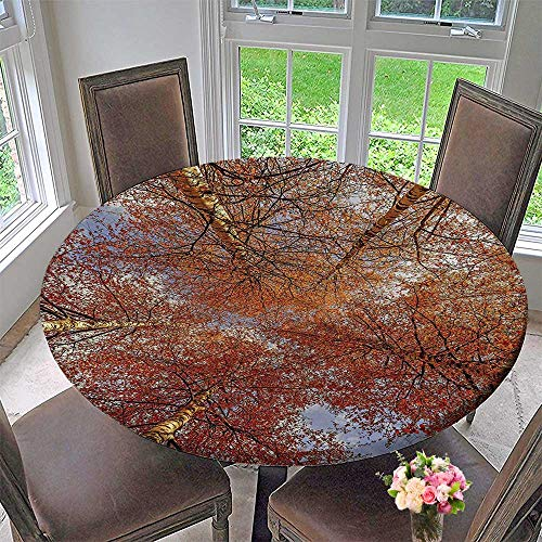 Mikihome Simple Modern Round Table Cloth Fall Birch Trees Rural Oak in Woodland Peace Park Foliage Orange for Daily use, Wedding, Restaurant 40