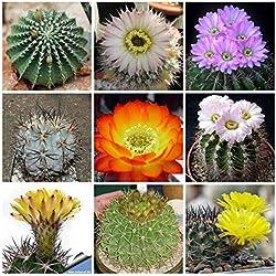 SpecialMix Acanthocalycium Species cacti seeds package 50 seeds