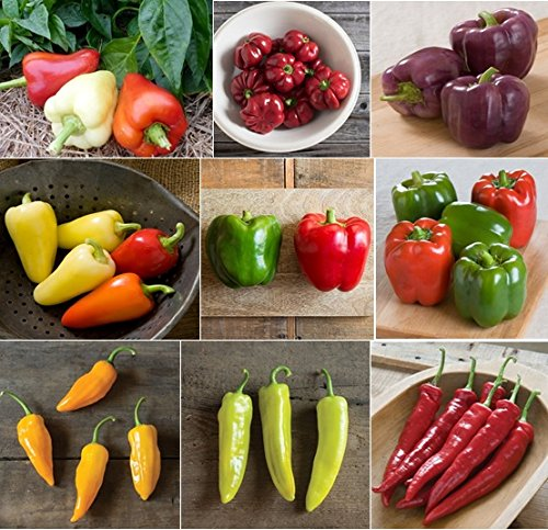 David's Garden Seeds Pepper Seed Collection Hybrid SL9333 (Multi) 18 Varieties 100 Hybrid Seeds
