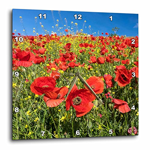 3dRose Danita Delimont - Flowers - Spain, Andalusia. A field of bright and cheerful red poppy wildflowers - 13x13 Wall Clock (dpp_277891_2) by 3dRose