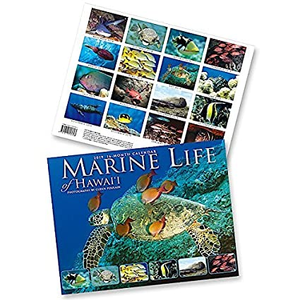 Hawaii School Calendar 2019-16 Amazon.: Marine Life of Hawaii, 2019 16 Month Trade Calendar