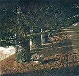 Andrew Wyeth Print 'Pine Baron' Americana Artwork Wall Art