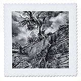 3dRose Danita Delimont - Utah - Desert Juniper growing out of a canyon wall, Cedar Mesa, Utah, Usa - 22x22 inch quilt square (qs_260264_9)