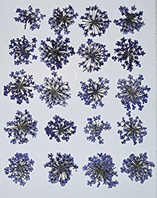 HANDI-KAFU Purple Queen Anne's Lace real pressed dried flowers by HANDI-KAFU
