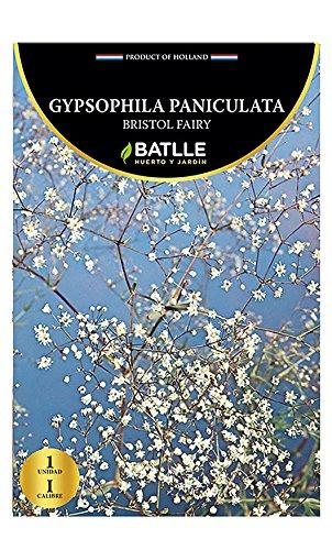 Semillas Batlle 075110 - Bulbo Gypsophila Bristol Fairy 075110BOLS