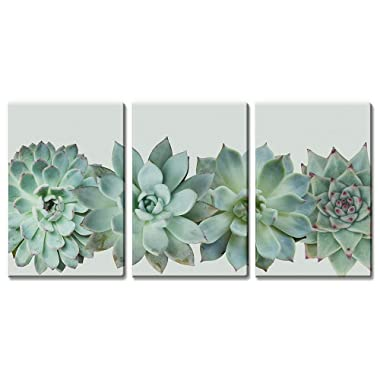 wall26 3 Panel Canvas Wall Art - Closeup Tropical Succulent Plant - Giclee Print Gallery Wrap Modern Home Decor Ready to Hang - 16 x24  x 3 Panels