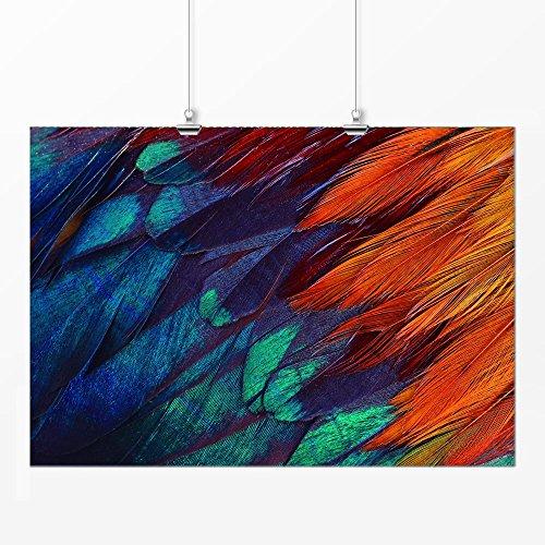 Pôster - Penas coloridas 29x42cm
