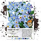 Seed Needs, Blue Forget-Me-Not (Myosotis sylvatica) 1,000 Seeds