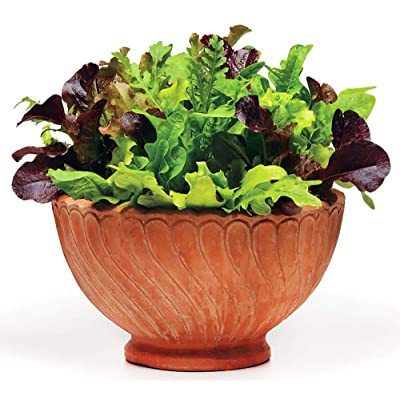 This is A Mix!!! 300+ ORGANICALLY Grown Lettuce Mix 20 Varieties Seeds Heirloom Non-GMO. Seeds are not Individually Packaged! : Garden & Outdoor