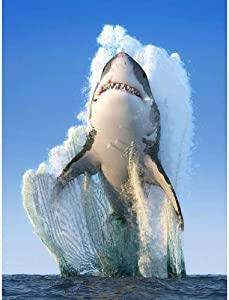 5D Diamond Painting By Number Kit For Adults, Diy Round Full Drill Cross Stitch Arts Craft,Cool Animal Ocean Shark,For Relaxation And Canvas Home Wall Decor