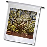 Cheap 3dRose Danita Delimont – Forests – USA, South Carolina, Charleston, Angel Oak – 18 x 27 inch Garden Flag (fl_279414_2)