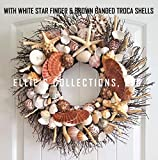 21''' Sea Shell Wreath on Birch Twig with Large Pectens, Giant Star Fish in 3 Different Color Highly Polished Troca Shells