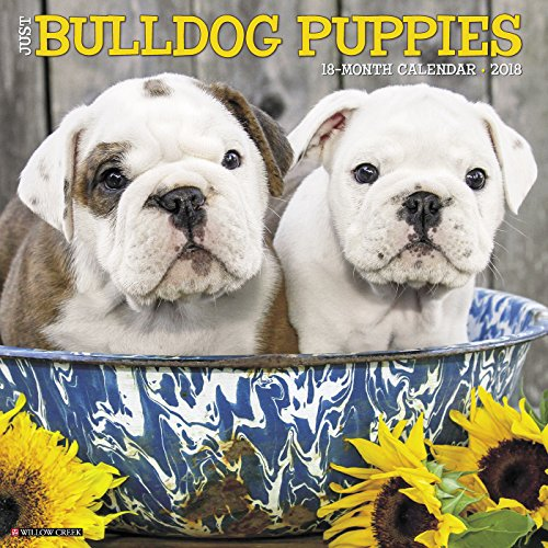 Just Bulldog Puppies 2018 Calendar