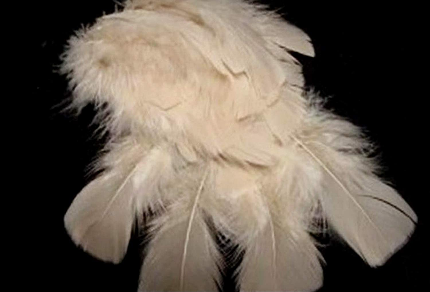 20 Beige Sand Hand Selected and Graded Turkey Plumage Feathers US Seller