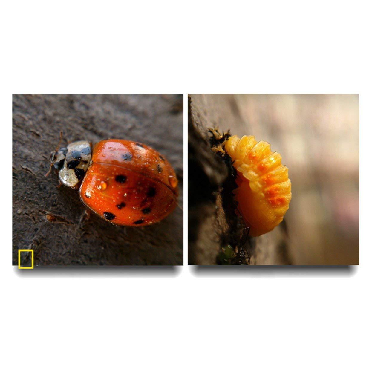 Lente Gran Angular Transformar tel/éfono en c/ámara Profesional Tree-on-Life Kit de Lentes de tel/éfono Multifuncional 3 en 1 Lente de Peces Lente de Macro