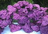 Premium Real Reef Live Rock Purple Coraline Marine Saltwater Aquarium