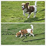 Hulless Dog Leash Nylon Training Leash Dog Traction Rope Dog Leashes for Small Dogs, Great for Dog Training, Play, Camping or