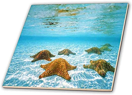 3dRose ct/_256310/_2 Image of Large Red Starfish On Bottom of Sea Ceramic Tiles 6
