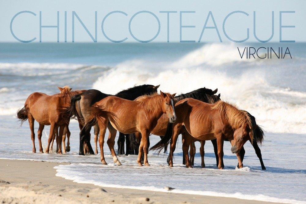 Chincoteague、バージニア州 – Horses on beach 36 x 54 Giclee Print LANT-78595-36x54 36 x 54 Giclee Print  B01N13W4HP