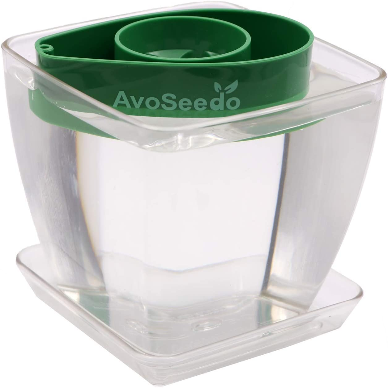 AvoSeedo Bowl Set Grow Your Own Avocado Tree, Evergreen, Perfect Avocado Tree Growing Kit for Every Avocado Lover with Plan Pot Kit-Green Transparent