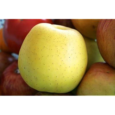Golden Delicious Apple Tree Semi-Dwarf - Healthy Established 1 Gallon Pot 1 Each from Grandiosy Farm : Garden & Outdoor