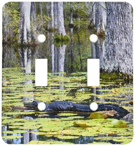 3dRose lsp_94248_2 South Carolina, Cypress Gardens Alliga...