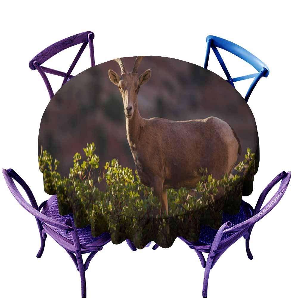 color05 63  Round(160CM) AndyTours Spill-Proof Table Cover,Bighorn Sheep Lambs Badlands National Park South Dakota,High-end Durable Creative Home,70 INCH