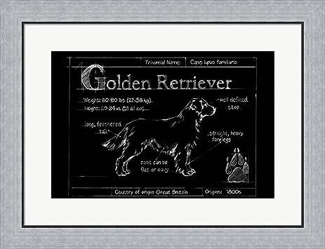 Amazon blueprint golden retriever by ethan harper framed art blueprint golden retriever by ethan harper framed art print wall picture flat silver frame malvernweather Gallery