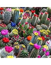 SeedsUP - 30+ Cactus Cacti Succulent - Flower Mix