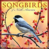 Songbirds of North America 2019 Wall Calendar