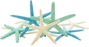 "Starfish | White Finger Starfish 4""-6"" 