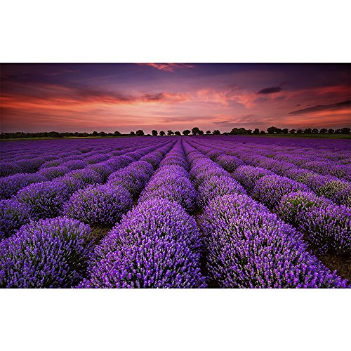 CHengQiSM 150 Pieces Mini Jigsaw Puzzle - Unique France Provence Lavender Field - Summer Sunset Landscape Puzzle for Kids Adult Mother's Children's Day Gift ()
