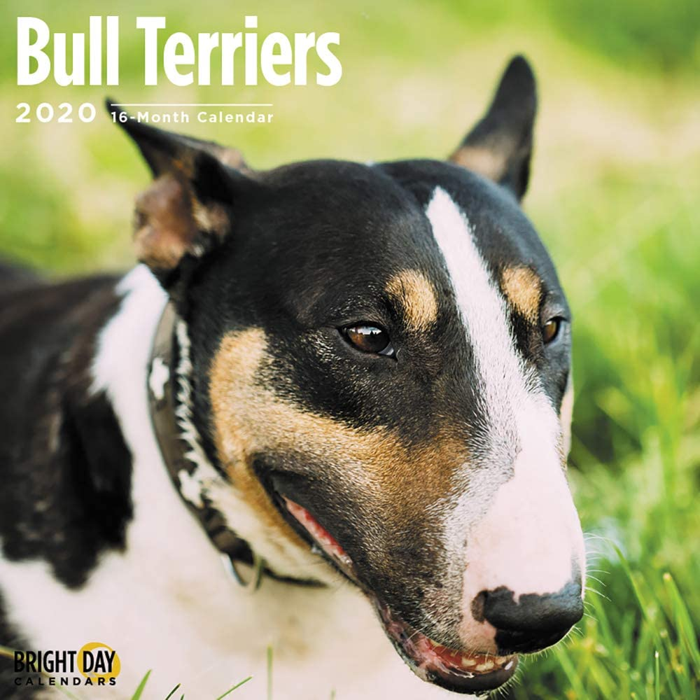 2020 Bull Terriers Wall Calendar by Bright Day, 16 Month 12 x 12 Inch, Cute Dogs Puppy Animals Adorable