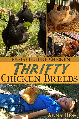 Thrifty Chicken Breeds: Efficient Producers of Eggs and Meat on the Homestead (Permaculture Chicken Book 3) by [Hess, Anna]